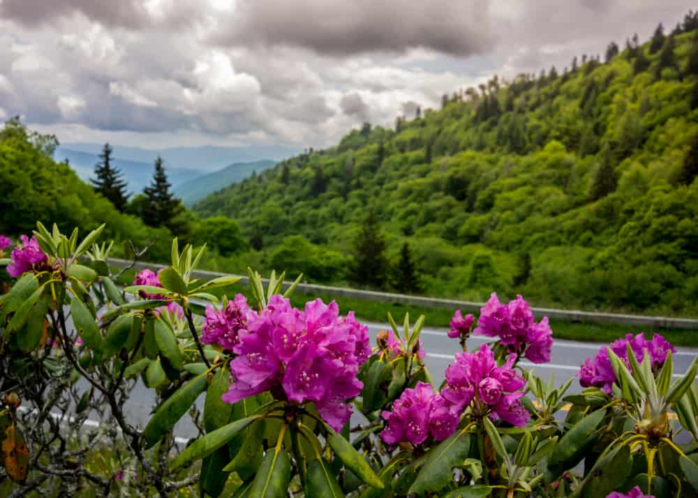 5 Reasons You Will Love Spring in the Smoky Mountains