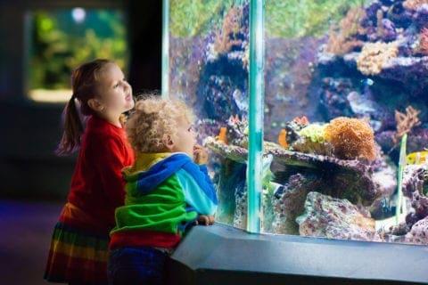 kids at ripley's aquarium of the smokies