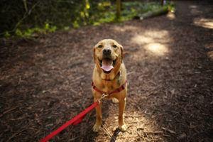 dog-hiking-mountains