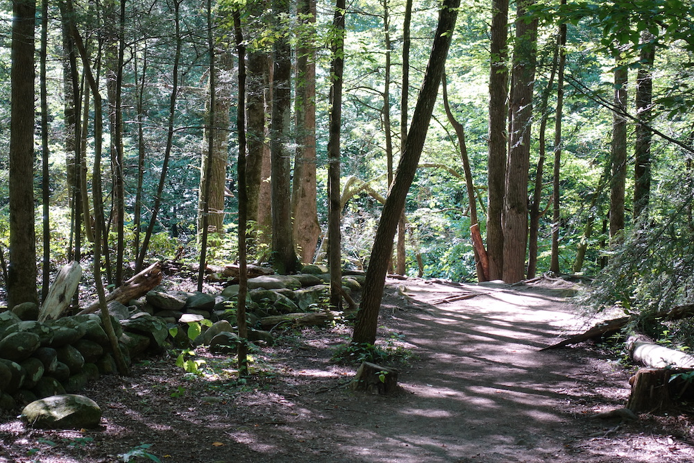 Top 5 Trails in the Smoky Mountains You Should Hike