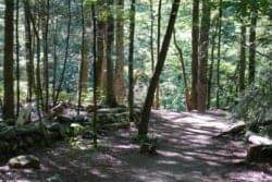 gatlinburg hiking trail