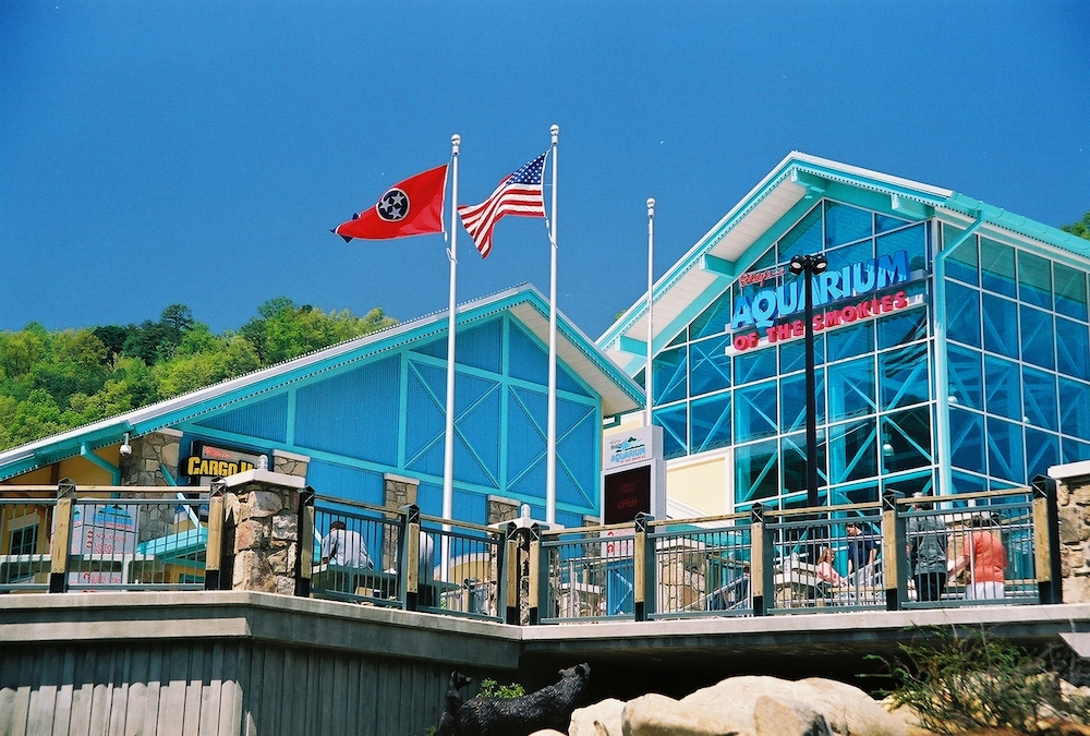 ripleys aquarium of the smokies